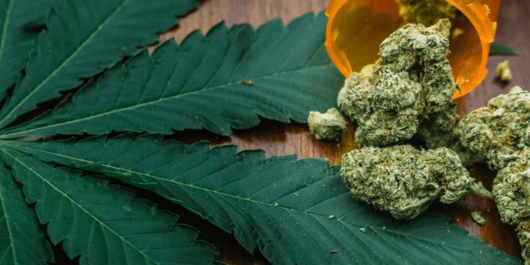 Marijuana Remains Problem in Dallas2
